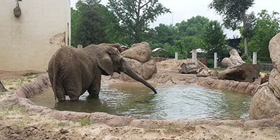 Info About Elephants